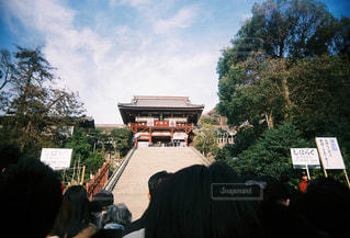 鶴岡八幡宮の写真・画像素材[1520017]