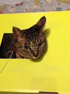 猫 - No.48152