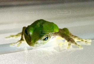 カエルさんの写真・画像素材[1471396]