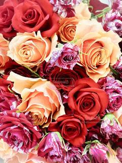 両手いっぱいの薔薇の花束!の写真・画像素材[1498333]