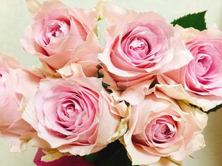 ピンクのバラの花束のアップの写真・画像素材[1470864]