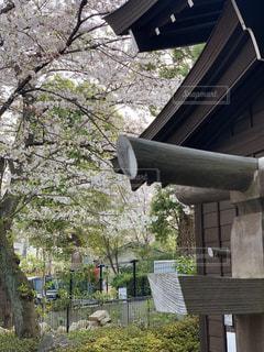 松陰神社の写真・画像素材[1991645]