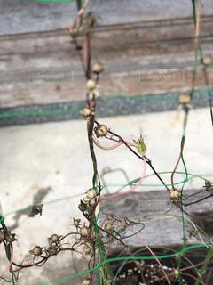 枝の上に座って鳥の写真・画像素材[1472239]