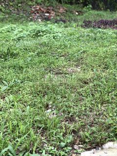近くに緑豊かな緑のフィールドのの写真・画像素材[1472240]