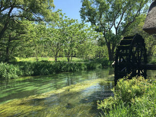 公園を流れる川長野わさび農園の写真・画像素材[1472455]