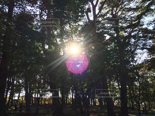 森の写真・画像素材[1610628]