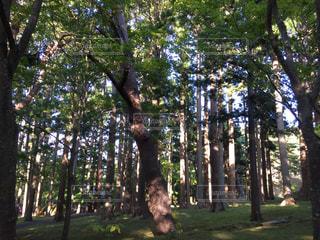 森の中の写真・画像素材[1610629]