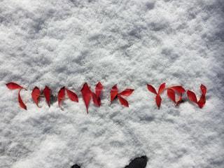雪の上にTHANK YOUの文字の写真・画像素材[1671647]