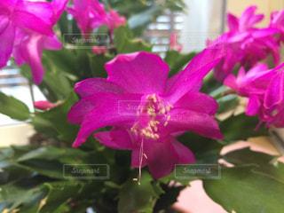 近くの花のアップの写真・画像素材[1697412]