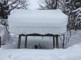 雪に覆われたフィールド 神社の写真・画像素材[1699574]