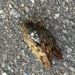 岩の上の昆虫、蝉の写真・画像素材[2343599]