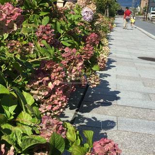 花園のクローズアップの写真・画像素材[2404574]