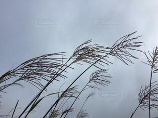 植物のクローズアップの写真・画像素材[2404877]