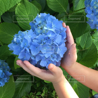 庭に植物を持つ手の写真・画像素材[2406491]