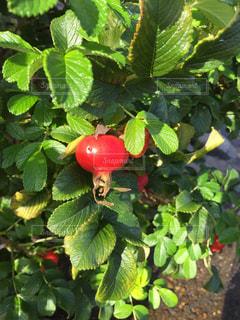 果樹のクローズアップの写真・画像素材[2428130]