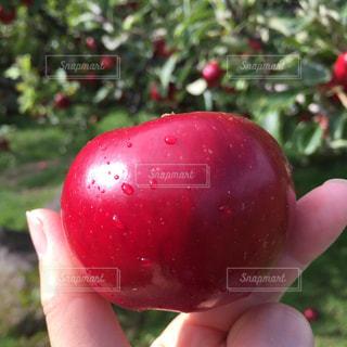 赤いリンゴを持つ手の写真・画像素材[2468482]