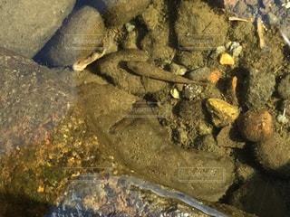 岩のクローズアップ、魚の写真・画像素材[2468512]