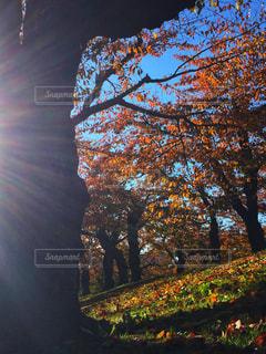 大きな木の写真・画像素材[2726349]