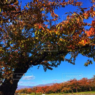大きな木の写真・画像素材[2726353]