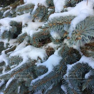 雪の山の写真・画像素材[2792321]