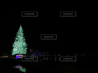 夜にライトアップされたクリスマスツリーの写真・画像素材[2819893]