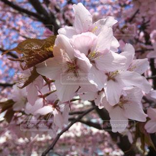 花のクローズアップの写真・画像素材[3195948]