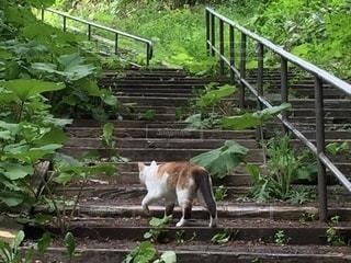 猫 階段 自然の写真・画像素材[3354287]