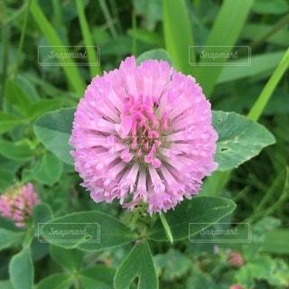 庭の緑の植物の写真・画像素材[3354297]