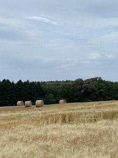 乾燥した草原 干し草ロールの写真・画像素材[3528787]