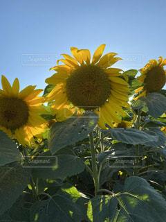 花のクローズアップの写真・画像素材[3595765]