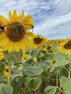 花のクローズアップの写真・画像素材[3595891]