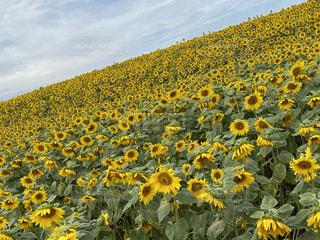 花のクローズアップの写真・画像素材[3595906]