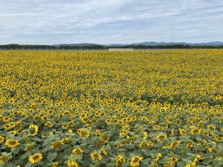 野原の花の写真・画像素材[3595917]