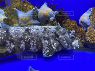 魚のクラーズアップの写真・画像素材[3624557]