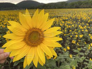 花のクローズアップの写真・画像素材[3709341]