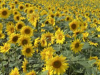 花のクローズアップの写真・画像素材[3709355]