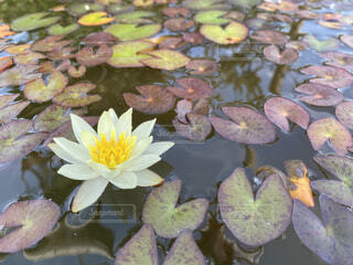 池のクローズアップの写真・画像素材[3709376]