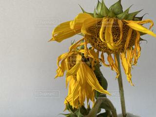 花のクローズアップの写真・画像素材[3726667]