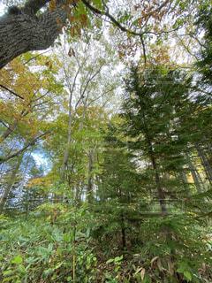 森の中の木の写真・画像素材[3815248]