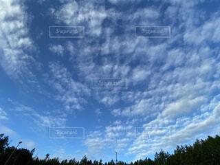 鱗雲の写真・画像素材[3821683]