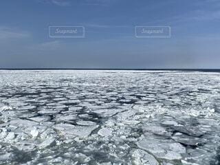 一面の流氷の写真・画像素材[4206611]