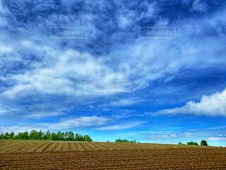 畑と春の空の写真・画像素材[4459692]
