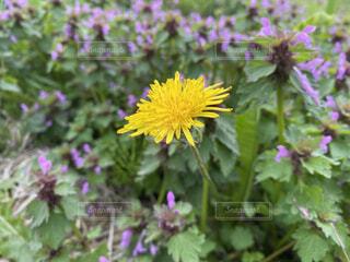 野原の花の写真・画像素材[4460880]