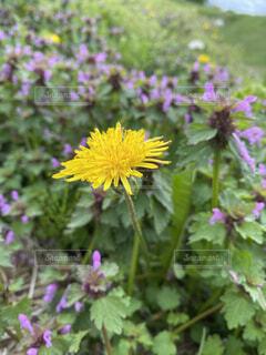 野原の花の写真・画像素材[4460886]