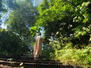 大きな葉を持つ女性の写真・画像素材[4539577]
