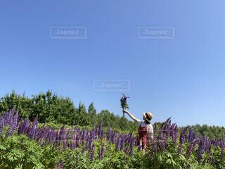 ルピナスの花畑で、赤いワンピースの女性の写真・画像素材[4561581]