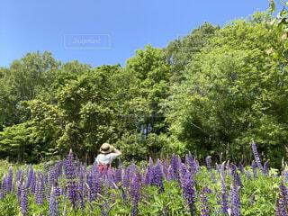 ルピナスの花畑で、赤いワンピースの女性の写真・画像素材[4561587]