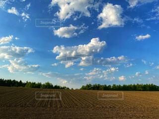 広大な畑と自然の風景の写真・画像素材[4565845]