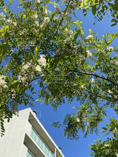 マンションと木々の写真・画像素材[4584048]