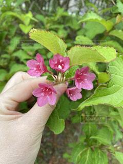 可愛いピンクの花の写真・画像素材[4647720]